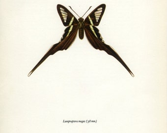 Vintage Butterfly Print, Green Dragontail, Swallowtail (89)  Prochazka, 1964, Lepidoptera, Natural History, Frameable Art