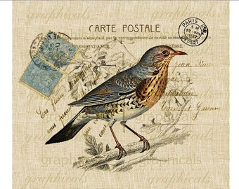 Paris bird instant clip art Carte Postale digital download image for iron on transfer to fabric craft pillow burlap decoupage No. 618