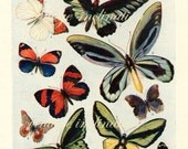 1938 Butterfly Print, PLATES 1417 1418 Vintage Antique Book Plate prints, 26 butterflies insects nature art illustrations