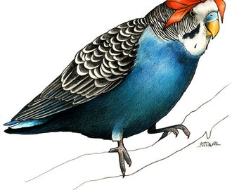 Budgie in a Bow - A4 Print
