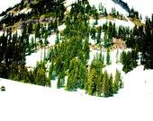 Mount Rainer, Snow, Trees, Mountain, 8 x 10 Photography Art Print