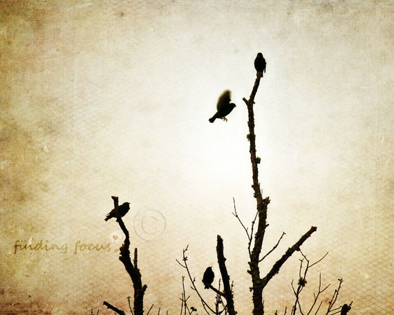 Black Bird Photo, Crow Art Print, Vintage Sepia Textured Photography Birds Decor, Mysterious Gothic Halloween Decor 8x10 Fine Art Photograph