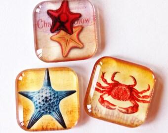 Magnets, Beach Magnets, Fridge Magnets, Glass Magnets, Glass Beach Magnets, Starfish, Crab (1759)