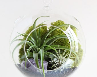 Air Plant Terrarium Kit with Amethyst Cluster - Large Hanging Terrarium
