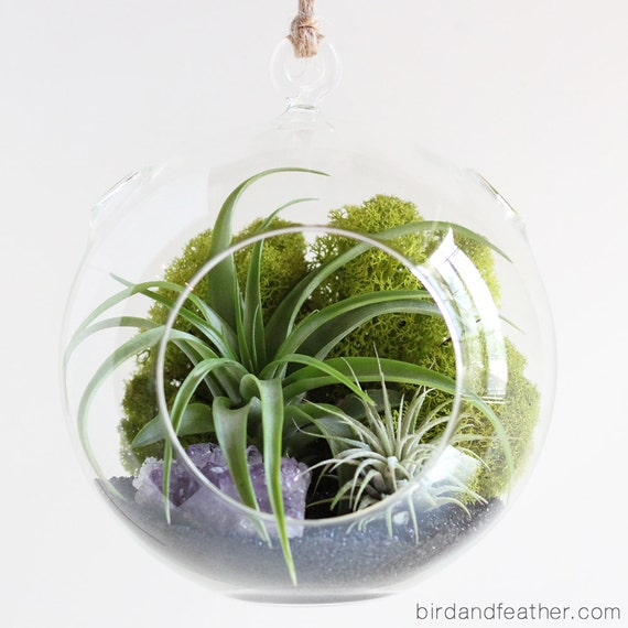 Air Plant Terrarium Kit with Amethyst Cluster || February Birthstone || Large Round Hanging