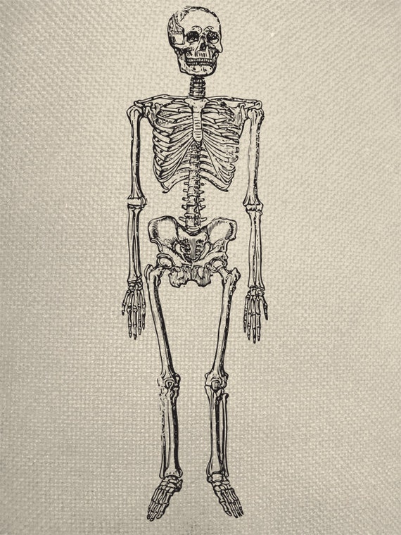 Human Skeleton Line Graphic Iron On Tote Bag By