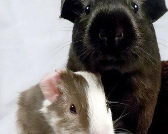 """Baby & Mother GUINEA PIG 8x10"""" Original Portrait - I Love Guinea Pigs!"""