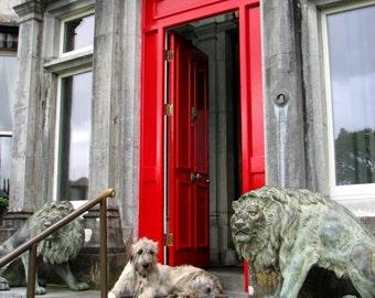 IRISH WOLFHOUND Photo, Red Door, Ballyseede Castle, Co. Kerry,IRELAND,Dog Lover, Wolfie,Mr. Higgins,Animal Photography,he Kingdom,Irish Gift