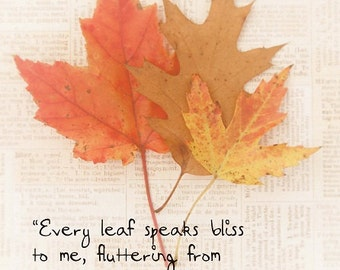 Fall Leaves Autumn Emily Bronte Quote FoilageTawny Brown Red Orange Yellow Simple Style Harvest Fall Thanksgiving, Fine Art Print