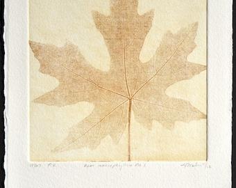 ACER MACROPHYLLUM No. 1, original copperplate etching, fine art printmaking, Big Leaf Maple leaf in golds, reds