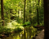 Enchanted Forest photo, Woodland photograph, Nature landscape, Spring, 8x12, trees, Schloss Nymphenburg, stream, Magical forest