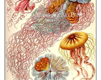 Ernst Haeckel Jellyfish Print or Poster, Ethereal Jellyfish Wall Art,  Nautical Art Print - Vintage Scientific Illustration