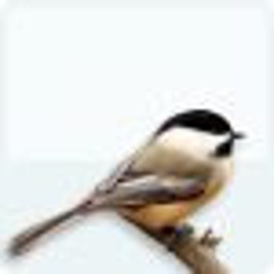 beyondbirds