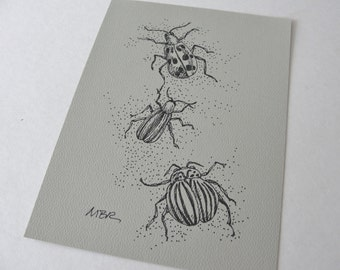Beetle Art Drawing, Original Art, Ink Drawing, Bug Insect Art, Black and White Insect Drawing, Nature Art Illustration 5 x 7