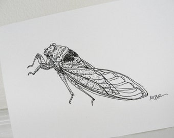 Cicada Original Art Ink Drawing Cicada Art Black and White Insect Drawing Nature Art Illustration 5 x 7