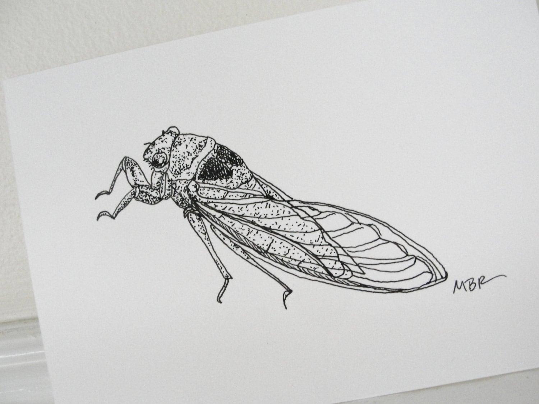 Cicada Original...