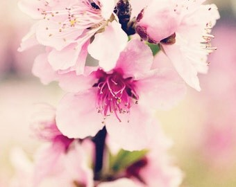 spring flower photography pink home decor pink blossoms nature photo landscape decor Pink Pear Blossoms no 1