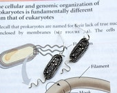 Bacterium Earrings
