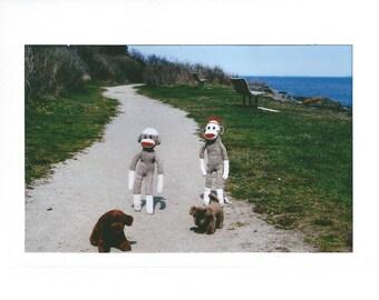 Walking the Dogs sock monkey card