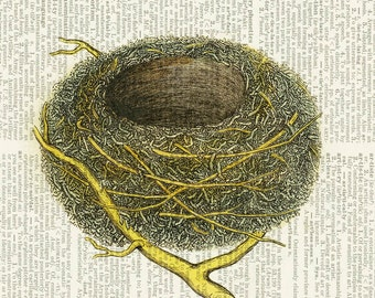 bird nest dictionary page print