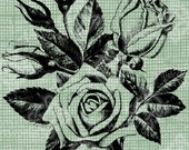 Digital Download Roses Antique Illustration image c. 1900, digi stamp, digis, digital stamp, Elegant, and beautiful