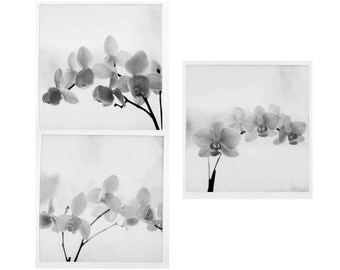 Three  Orchid  Photographs, Black and White  Still Life Wall Decor,  Floral  Art Print Set