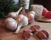 Honoring the Earth Heirloom Gourmet Garlic, Homegrown Organically, Unsurpassed Flavor & Culinary Flair, Heart Healthy, Easy to Peel