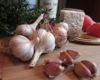 Honoring the Earth Heirloom Gourmet Garlic, Homegrown Organically, Unsurpassed Flavor & Culinary Flair, Heart Healthy, Easy to Peel 10 Bulbs
