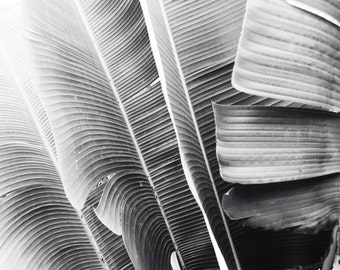 Banana leaves black white photography  tropical leaf botanical print modern gray wall art 'Lush Leaves'