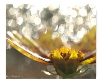 Flower Photograph Flower Print...Affordable Home Photography Prints Nature Photography Nature Lover Woodland Scene Flower Botany Print