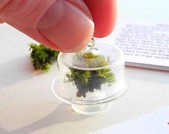 Tiny Living Miniature Moss Garden Terrarium Kit with Tiny Glass Cloche, Real Moss, Mini Terrarium, Authentic Realistic Miniatures, Cute