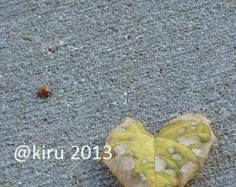 Bug Love Photograph