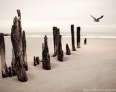 Seaside - Creamy,  Color Photograph of Tranquil Seashore, Seagull Nature Fine Art Photography Print Free Shipping.
