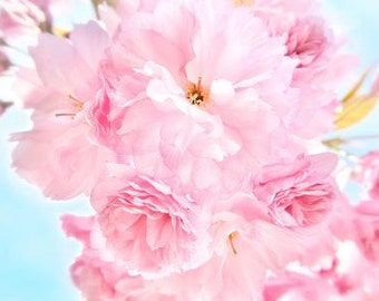 Soft blue sky with pink peonies - romantic contemporary nature spring summer macro flower fine art photograph inspirational happy nursery