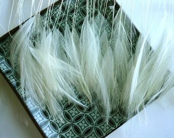 STRIPPED COQUE HACKLE / True Ivory, Cream / 1162 / 24 pieces