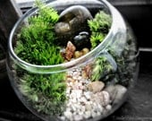 Terrarium Bowl Planter / Easy to Care For Indoor Plant / Miniature Garden Under Glass