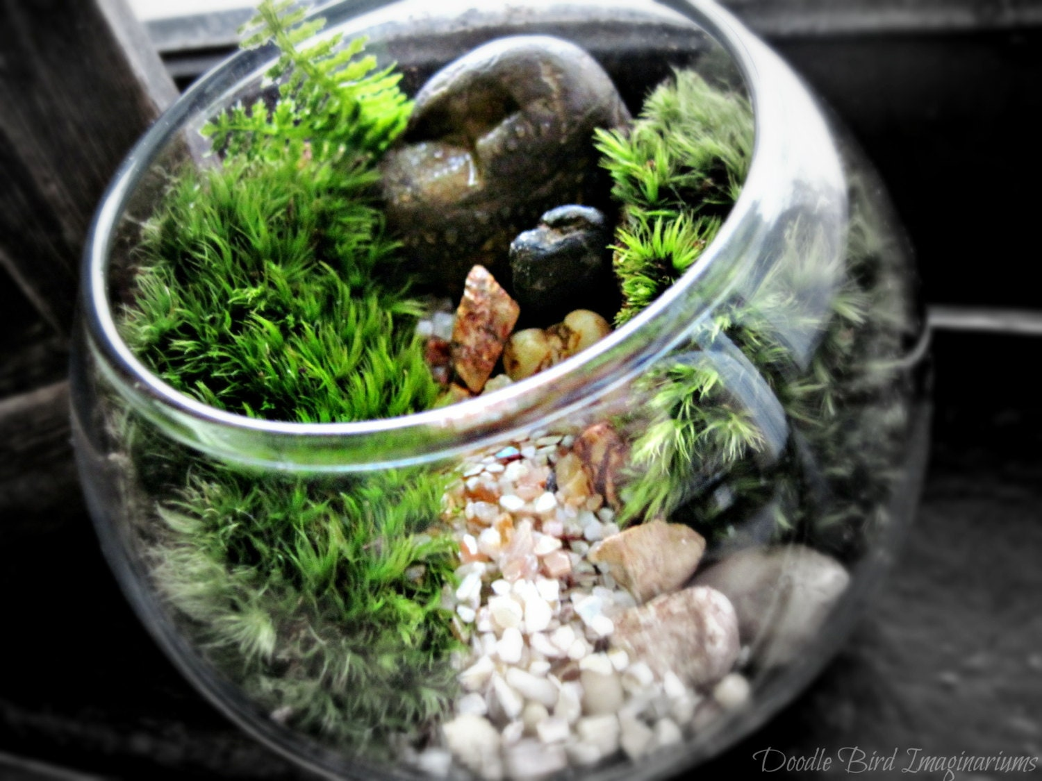 mini bowl terrarium with live moss already assembled ready. Black Bedroom Furniture Sets. Home Design Ideas