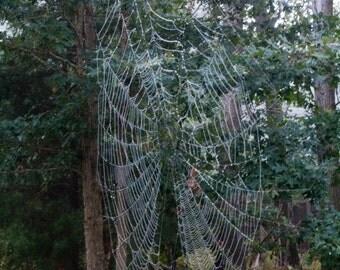 Photograph Spider Web Nature Print
