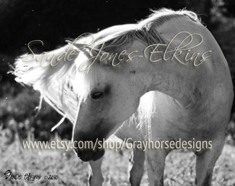 Iridescent, a beautiful white horse in the sunshine