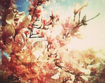 Pink Flowers in Bloom Vintage Style Fine Art Photograph