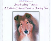 Step by Step Art Tutorial - Drawing a Collie using Coloured Pencils on Drafting Film