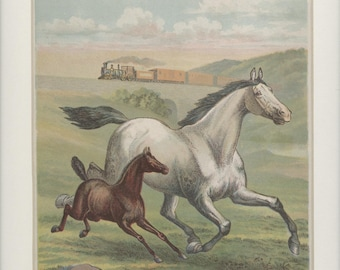 Domestic Farm Animals Antique 1903 of Mare and Foal Print