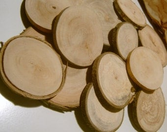 20   Blank Tree Branch Slices  2 to 3 inch