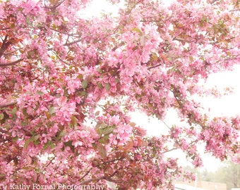 Spring Pink Blossoms, South Carolina Pink Trees, Pink Cherry Blossoms, Shabby Chic Pink Nature, Charleston South Carolina Pink Blossoms Art