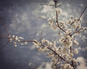 White Blossom  8x10 ColorOrginal  Art  Photograph by StaticMovement