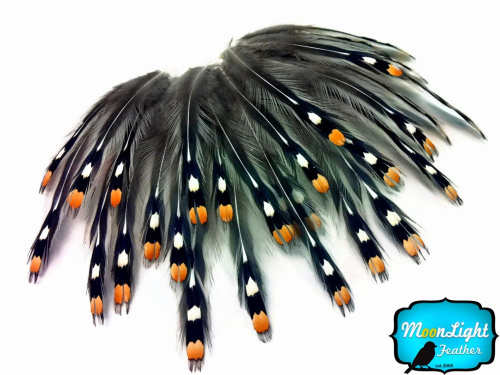 Unique feathers 10 pieces natural gold jungle cock big eye for Where to buy craft feathers