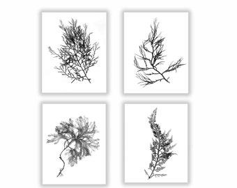 Black and White Botanical Seaweed Print Set, Wall Decor, Set of Four,  Seaweed Prints, Coastal Living