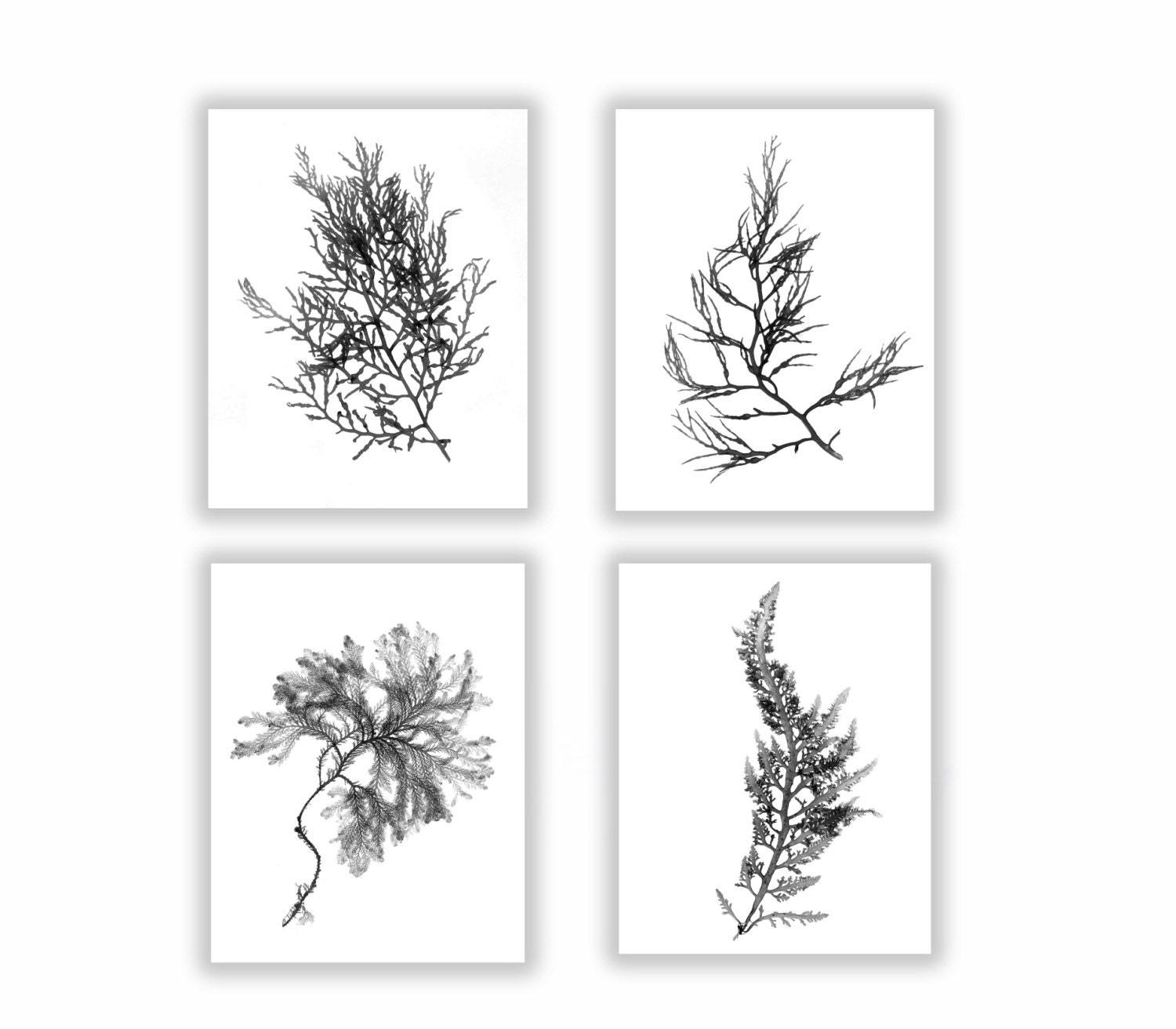 Black and white botanical seaweed print set wall decor set for Black and white mural prints