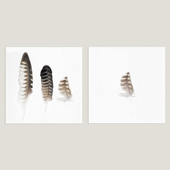 Falcon Feathers Set of Two 8x8 Fine Art Photographs by aylorelai