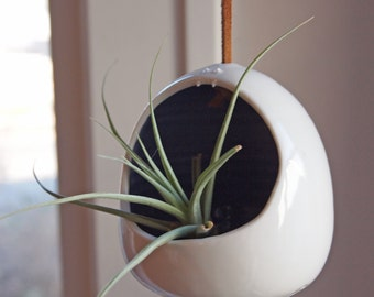 hanging plant monster with lavender mouth, perfect for air plants